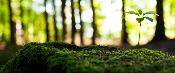 environment-759.jpg